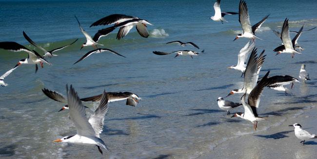 Abfliegende Vögel am Strand