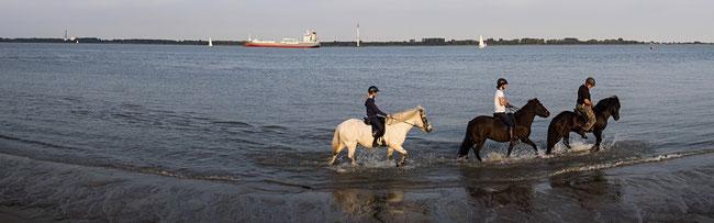 Bild: Reiter in der Elbe