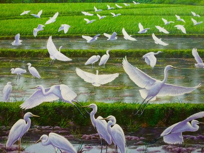 Bild: Reiher im Reisfeld auf Bali