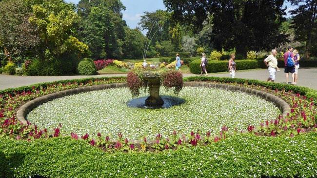 Bild: Botanischer Garten in Kandy