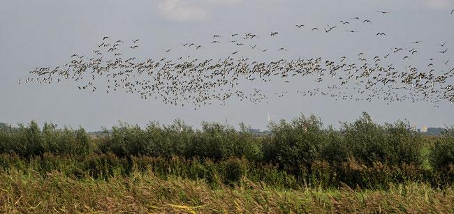 Bild: Vogelzug
