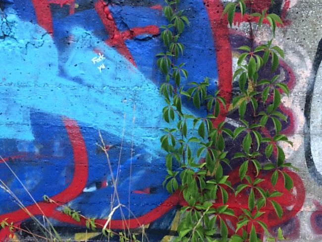 Graffiti mit Wildpflanze in München