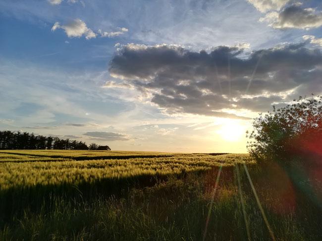 Sonne über Feld in Holzwickede