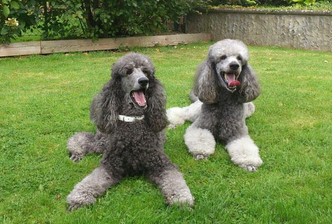 Lola und Gandi
