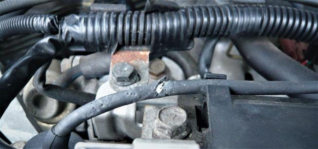 Steinmarderschaden am Motor