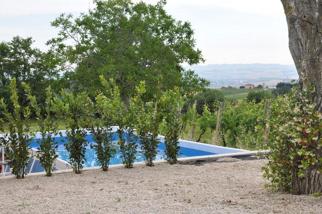 piscine 7 x 4m