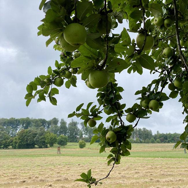 entlang der Strecke laden Obstbäume zum Snacken ein
