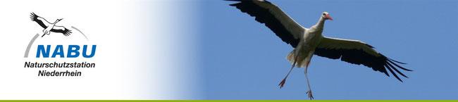 Naturschutzseite / Viele Natur-Info's / Naturbeobachtungen am Niederrhein