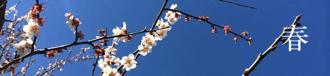 春の農産物