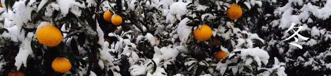 冬の農作物