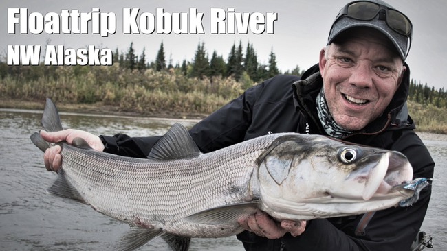 Flyfishing Sheefish Kobuk River Alaska