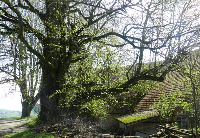 Der wunderbare Ort mit den alten Bäumen soll unser neues Zuhause werden