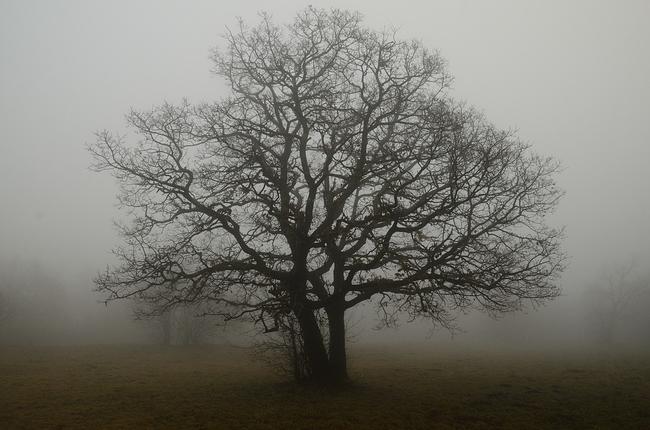Novemberstimmung (Bild: https://pixabay.com/de/baum-ge%C3%A4st-nebel-einsamkeit.1230809