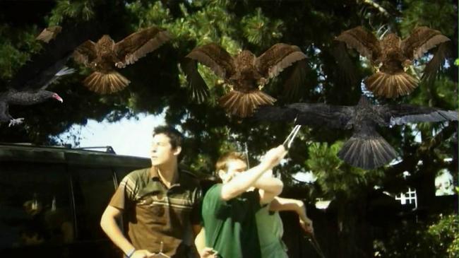 Birdemic: Shock & Terror