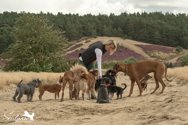 Tagesbetreuung für Hunde, Hundebetreuung, Gassiservice, Ausführservice, Hundesitter, Hundepension  Potsdam