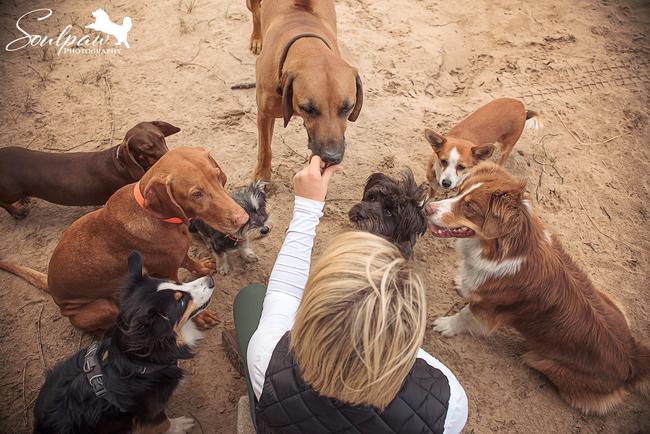 Tagesbetreuung für Hunde, Hundebetreuung, Gassiservice, Hundetagesstätte, Hundepension, Hundesitter Potsdam