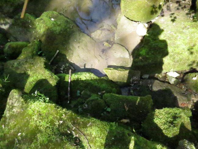 Nach ausführlichem Googeln zuhause bin ich der Meinung, dass mein Schatten hier in den Riedgraben fällt