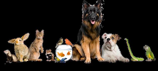 app di incontri animali sito di incontri damore online gratuito