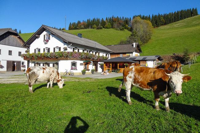 Almheuriger - BioBauernhof Moas (ca 10 Min. Fahrzeit)