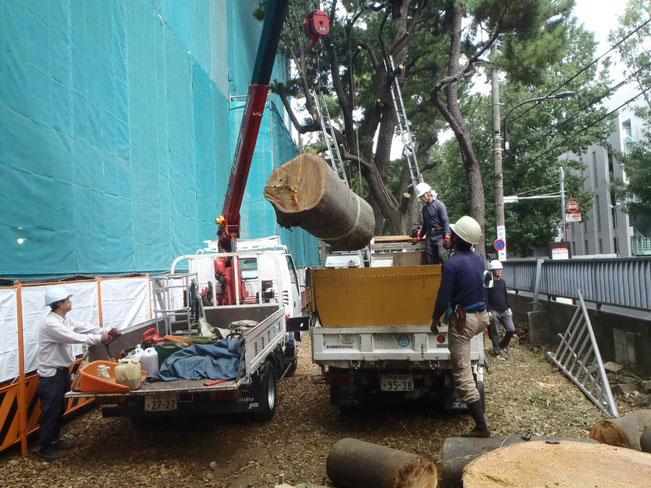 平26富士見町2丁目11番地内歩道新設工事 高木伐採状況