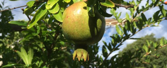 chillfood's kulinarische alpentour, granatapfel
