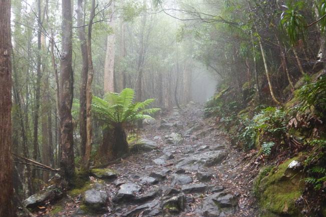 Fog on Reid's Track