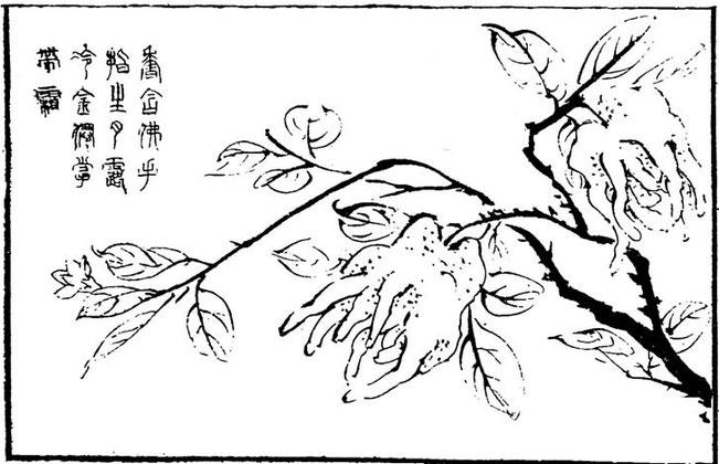 Main de Buddha. Henri Focillon, Le Livre des Magiciens.