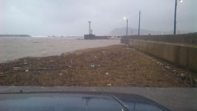 ↑↓港はゴミだらけ。歩けそう。これがやがて僕らの海に・・