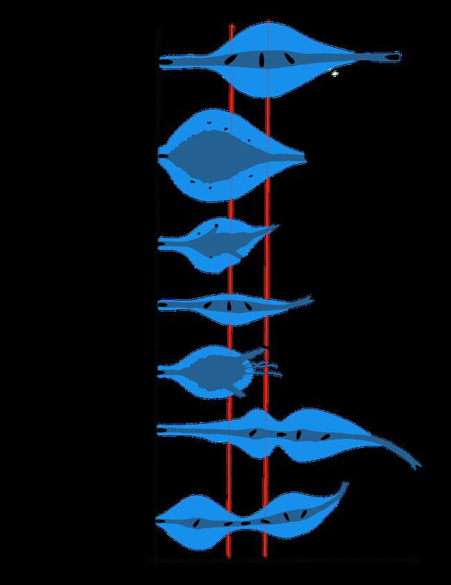 Wundkanäle verschiedener Geschosstypen (Langwaffe) (a): Extremitätendurchmesser Oberschenkel / (b): Rumpfdurchmesser quer