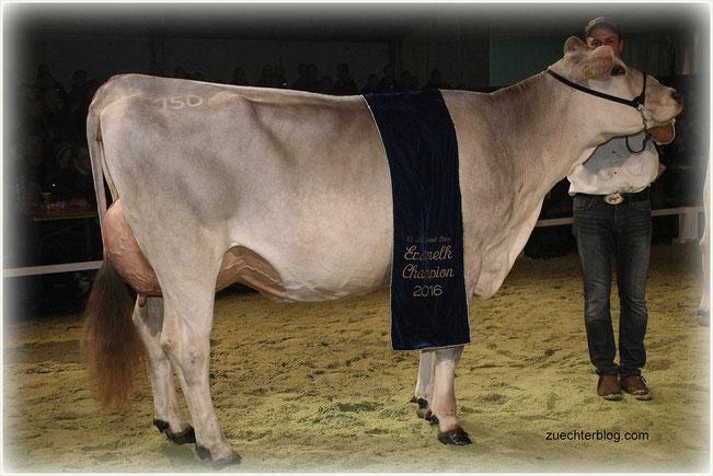 Erstmelker Champion Jongleur Pearl stammt aus der Schweiz und ist im Gemeinschaftsbesitz von Andreas Bechter aus Sieban und den Gebrüdern Voppichler aus Hittisau.