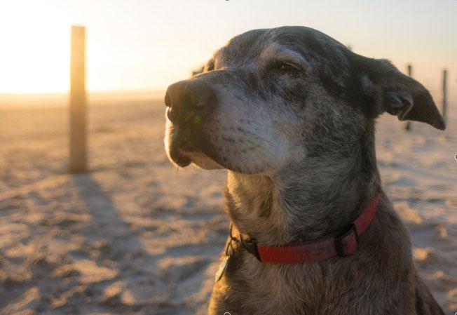 Horvi-Enzym-Therapie Hund