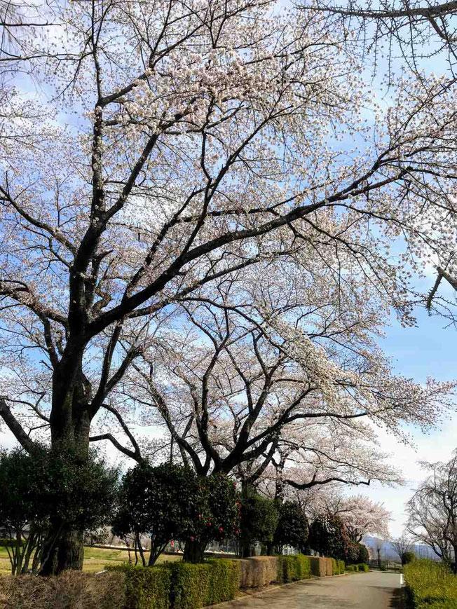 鏡石町 鳥見山公園とふくしま遊歩道50選
