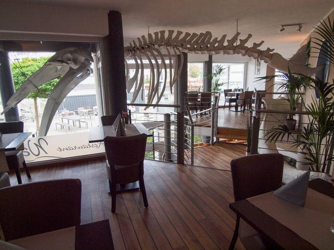 Das Skelett des Baby Wal