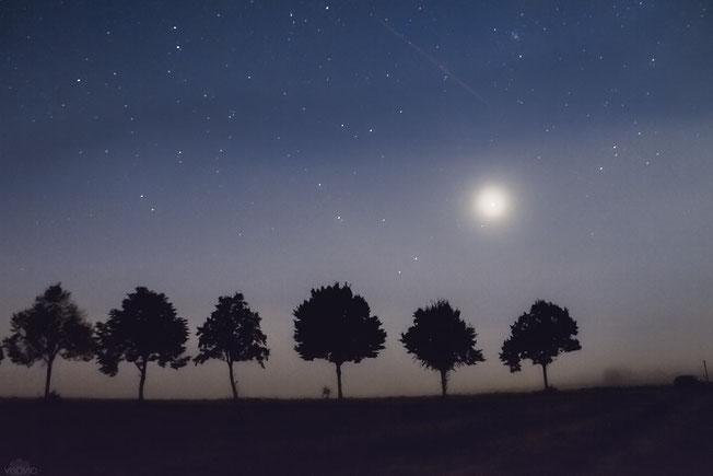 venus in der blutmondnacht | visovio 092015 | ascheberg  #venus #nachthimmel #baumallee #planet #sternschnuppe #nebel #mofi2015