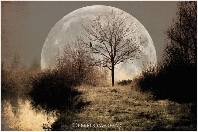 Mystical Moorlandscape