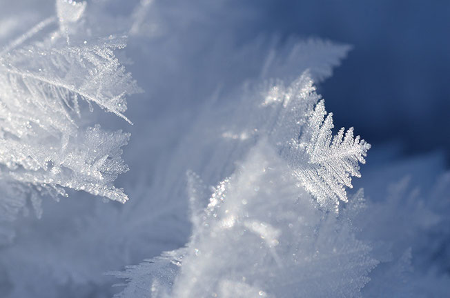 Wie Federn wirken diese Kristalle. Etwas tricky eine wirkungsvolle Schärfenebene zu definieren.