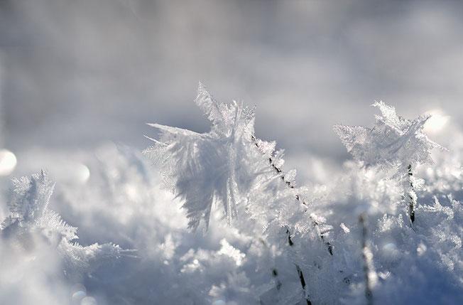 Diese Formen erinnern mich an vereiste Bäume in einer winterlichen Landschaft.