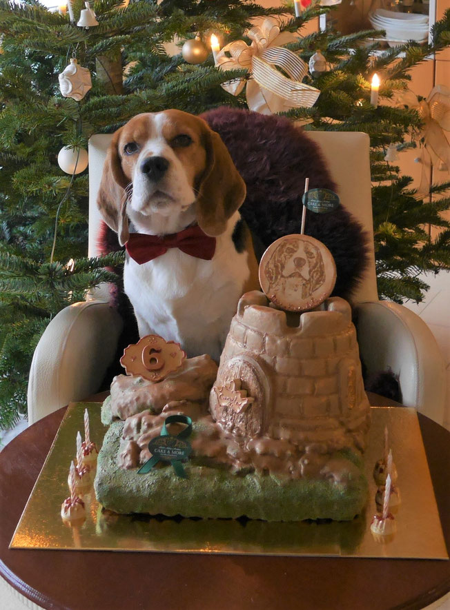 Little King Arthur, Bagio Boss Gintarine Fortuna * Lord James *, Czarnowsky , Beagle, Beagle, Beagle, Beagle, Beagle