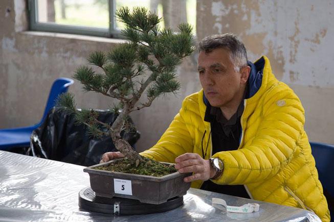 Cesare Cogliati - Amici del Bonsai Castellanza - Miglior bonsaista del Coordinamento 2018