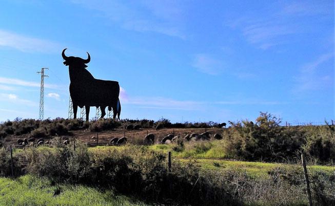 auf dem Weg nach Sevilla grüsst der Osborne-Stier hoch über den noch lebenden Schweinechinken
