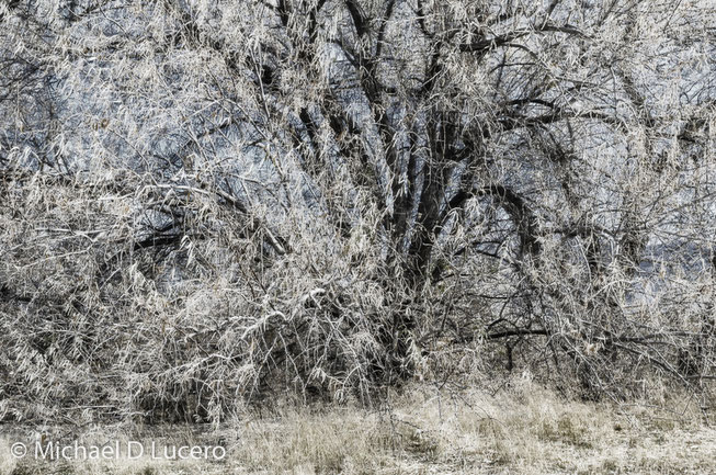 Tree with sharp branches and twigs in the middle of tall grasses