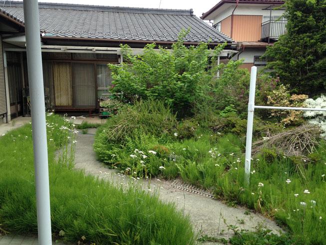 第1期側の現況写真。この軒下で猫の親子がのんびりしてました。