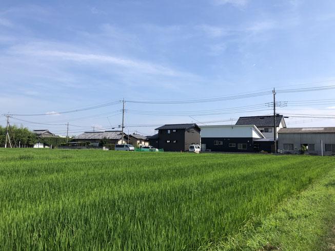 長野県では考えられない小麦と米の二毛作!の田んぼの目の前。現場に通っている間も畑の進行状況に興味津々でした。