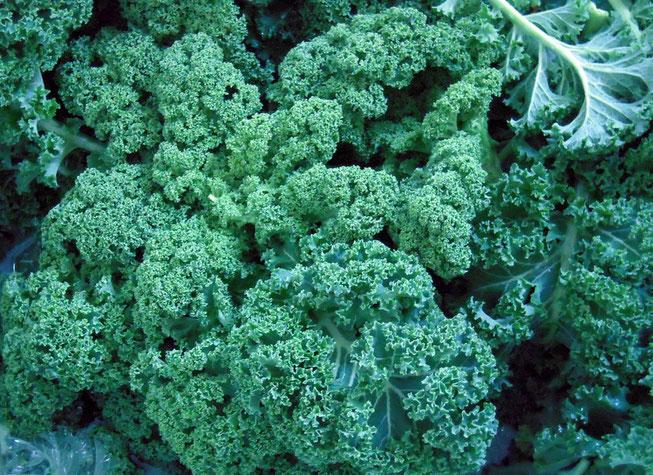 Das besondere Gemüse aus dem Norden