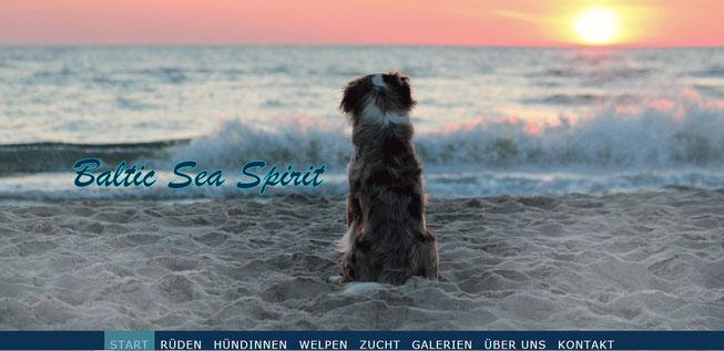 Baltic Sea Spirit - Miniature American Shephard Zucht in Ostholstein