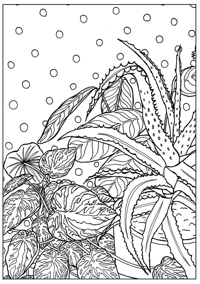 plant, succulents, drawing, illustration, black and white, coloring, free download