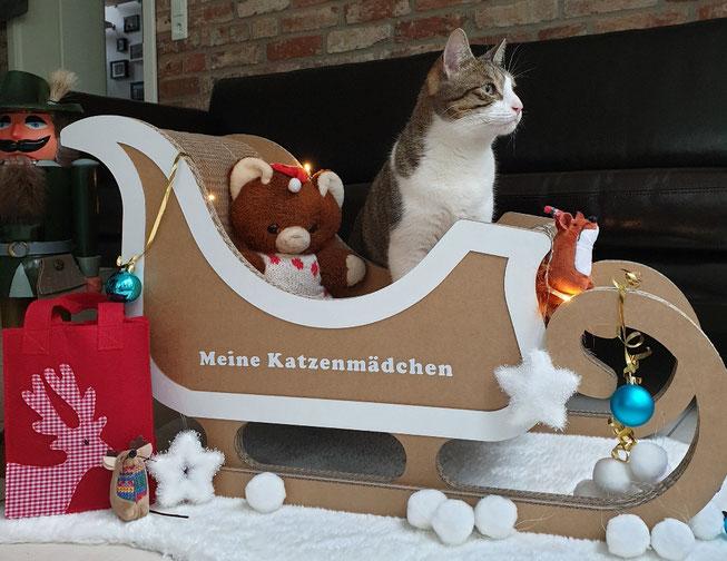 Katzenmädchen Kasi im Katzenschlitten von Seefalke-Design