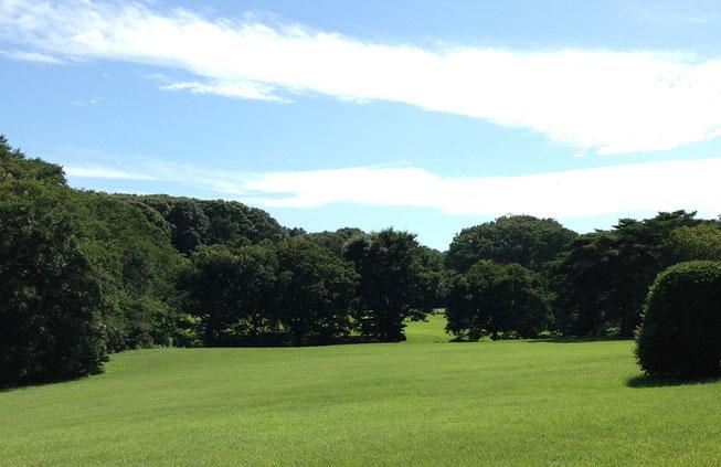 綺麗な青空と公園の緑