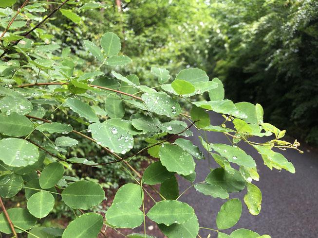 7月19日。長い梅雨の終わりの時期の朝。こんな雨上がりは梅雨も悪くない。