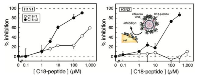 図5 N-ステアロイルペプチド(C18-f1およびC18-s2)によるMDCK細胞のインフルエンザウイルス感染の阻害。H1N1(A/Puerto Rico/8/34)またはH3N2(A/Aichi/2/68)(文献4)。